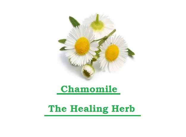 Just Eat Veggies Chamomile Flowers The Healing Herb