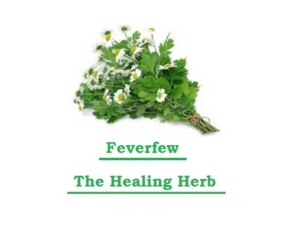 Just Eat Veggies Feverfew The Healing Herbs