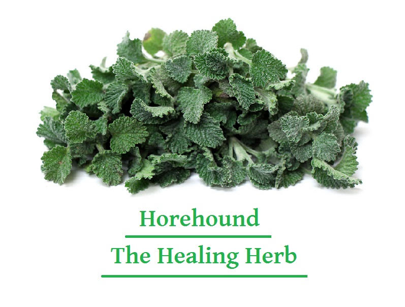 Horehound, The Healing Herb