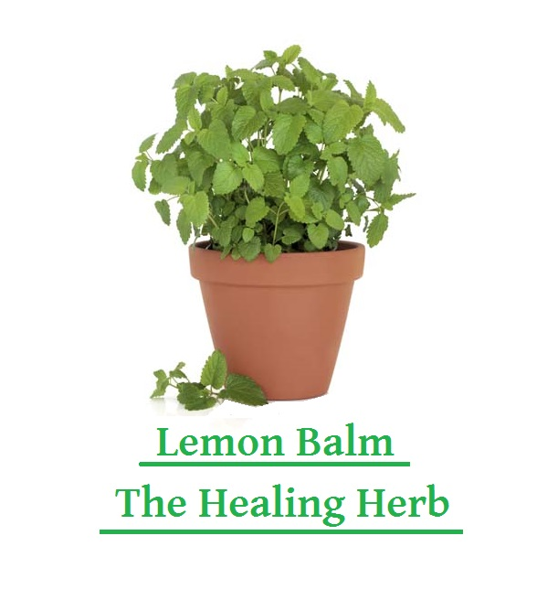 Lemon Balm, The Healing Herb