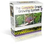 grow perfect grape vines that produce